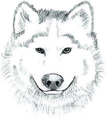 Husky Coloring Page Free Printable Pages Wolf Face Top