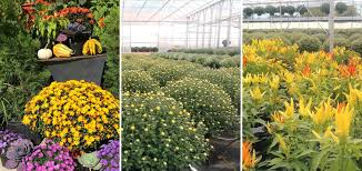Robben Florist & Garden Center - Flowers, Gardening Supplies ... Primordial Solutions Home Facebook If You Ever Buy Plants Youll Love This Trick Wikibuy 30 Off Hudson Valley Seed Library Promo Codes Top 2019 View Digital Catalog Leonisa Discount Code Gardeners Supply Company Coupon Groupon 50 Promotion October Online Coupons Thousands Of Printable Midwest Arborist Supplies Penguin Stickers Chores Household Tasks Laundry Fitness Cleaning Gardening Planner Voucher Codes Food Save More With Overstock Overstockcom Tips Mygiftcardcom