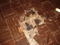great environmental asbestos removal mold remediation building