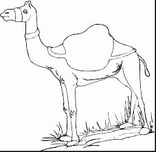 Remarkable Camel Coloring Page Photos With And Bactrian