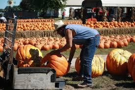 Pumpkin Farms In Belleville Illinois by Farm Fresh U2013 Chesterfield Lifestyle Magazine