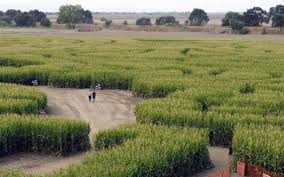 Lathrop Pumpkin Patch Maze by Your Guide To Modesto Area Corn Mazes Pumpkins And Ghouls The