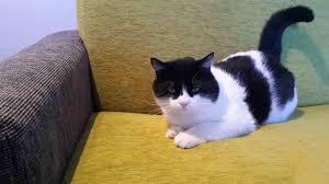 cat sofa anti scratch sofa and armchair cat friendly sofa cat friendly sofa