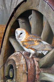 154 Best Barn Owls Images On Pinterest | Barn Owls, Snowy Owl And ... The 25 Best Owls Ideas On Pinterest Baby Owls Barn And Birding Buddies Owl 150 Images Children Art Animal Centre Information 59 Birds Beautiful Pin By Tk P Sew Craft Felting Felt Birds Bird Best Owl Framed Original Drawing Thebriarartshop Etsy Ockphobarwlsepwhilestandgonefootin 20 Fun Facts About Trivia