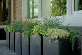 Plant Container Ideas Spaces Rustic With Potted Wood Siding