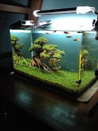 large aquarium rocks for sale best 25 driftwood for aquarium ideas on plant fish