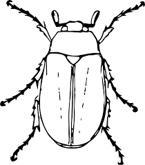 Clipart May Beetle