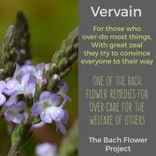 Bach Flower Remedy Sweet Chestnut Helping us when extreme despair