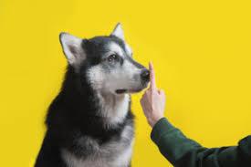 dem hund das bellen abgewöhnen tipps für typische situationen