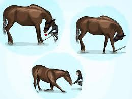 Best Horse Shedding Blade by 14 Best Horse Trick Training Images On Pinterest Horse Tricks
