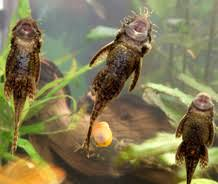 aquarium poisson prix poisson nettoyeur prix