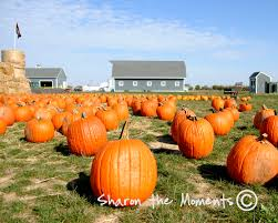 Columbus Pumpkin Patch by The Orchard And Company Pumpkin Patch In Plain City Oh Offers A