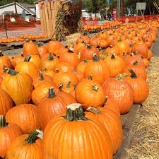 Best Atlanta Area Pumpkin Patch by Charity Pumpkin Patch Now Open In Simpsonville