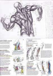 Muscle Anatomy Coloring Book Pages For Kids Human Body