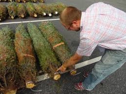 Christmas Tree Farm For Sale Boone Nc by Study A In The Christmas Tree Industry News