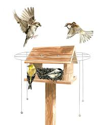 pdf plans birdhouse plans finch download extra long twin loft bed