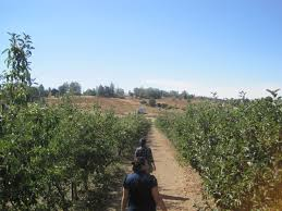 Julian Pumpkin Patch 2014 by A Guide To A Day Of Apple Picking In Julian Ca Nerds With Food