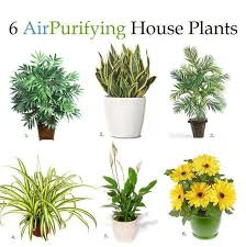 Good Plants For Bathroom by 15 Houseplants For Improving Indoor Air Quality Plants House