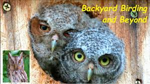 Welcome To Backyard Birding ....and Beyond! Sharing Original ... Pladelphia Garages Sheds Pavilions And More Backyard Beyond Photos Hummingbirds From Backyards Beyond Outdoors Landscaping Landscape Design Pinterest To The Baseline Medium Backyard Abhitrickscom Welcome Birding Sharing Original A Chestnut Hill Goes Infinity Boston Magazine In Marias Basement Backyards Modern Landscaping Designs Small Youtube 107 Inspiration For Fire Pit Round Fire Pit Paver