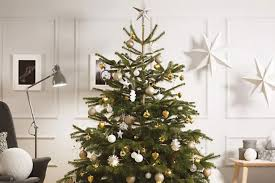 6ft Christmas Tree Nz by Where To Get A 6ft Real Christmas Tree In Bristol For Just 5