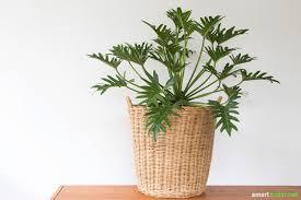 zimmerpflanzen als natürliche einschlafhilfe und für