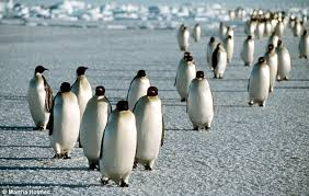 germans are told to just walk like a penguin in icy conditions