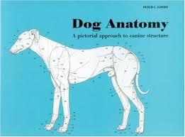 Dog Anatomy Peter Goody C 9780851316369 Amazon Books