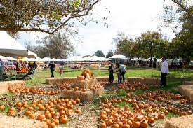 Pumpkin Patch Hospitality San Bernardino Ca by Company Halloween Party Ideas Themes Games Costume Contest