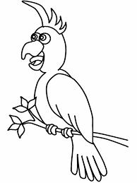 Birds Cockatiel2 Animals Coloring Pages Book