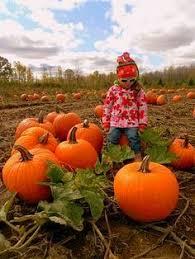 Big Orange Pumpkin Patch Celina Texas by A Fun Pumpkin Patch At Forneris Farm Mission Hills Ca Kid