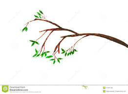 Hand draw sketch of tree branches