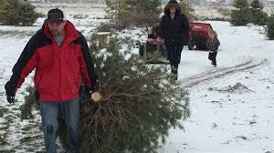 Christmas Tree Saplings For Sale Ireland by Keeping It Real At Farr West Christmas Tree Farm