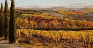 Tuscan Vineyards Landscape 5