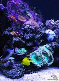 aquarium nano eau de mer aquarium récifall design folies aquatiques eau de