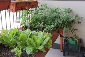 potager de balcon réussi ou comment cultiver des légumes en pot