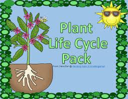 Life Cycle Of A Pumpkin Seed Worksheet by Herding Kats In Kindergarten Plant Life Cycle Unit