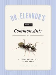 Ants In Your Stockings   Backyard And Beyond Texas Backyard Naturalist Butterflies North Potomac Valley Audubon Society Pvas Habitats Bird Wallpapers The Backyard Bedroom Licious House Pool Ideas Best Pools Home Giles Frontier Brisbane Gum Trees At My Place Eucalyptus Major Amazing Most Professors Wife Snowy Owl Shorteared Owl