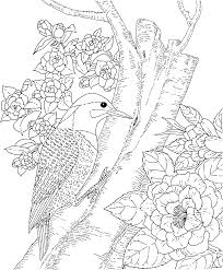 Backyard Animals And Nature Coloring Books Free Pages Bird PagesFree Printable PagesAdult