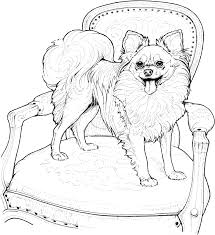 Chihuahua Coloring Pages Printable F 11487 Images