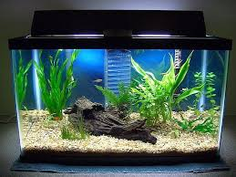 Spongebob Aquarium Decor Set by Aquarium Tank Set Up Mine Needs An Extreme Make Over Someting