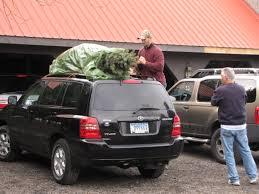 Christmas Tree Shops York Pa Hours by Misty Run Tree Farm Lebanon U0027s Largest Choose U0026 Cut Christmas