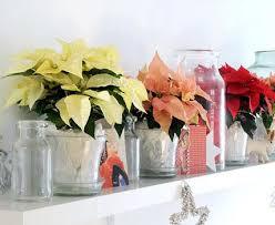 weihnachtsstern dekoideen für weihnachten living at home