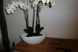 beau cache pot pour orchidées ou autre vase récipients