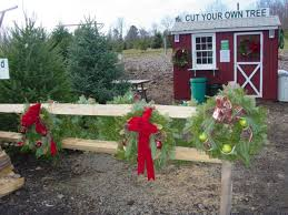 Plantable Christmas Trees Nj by Northeast New Jersey Christmas Tree Farms Choose And Cut
