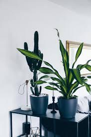 der pflanzen guide 15 stylische und pflegeleichte