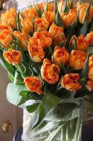 tulip orange princess vrt bulb flowers princesses