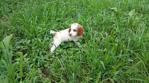 shed hunting dog training how to train your dog to shed hunt