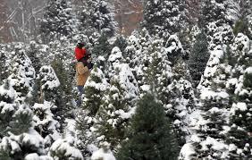 Miller Christmas Tree Farm Ct by Tis The Season The Atlantic