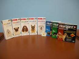 heartgard for cats flea and heartworm preventative for dogs and cats square