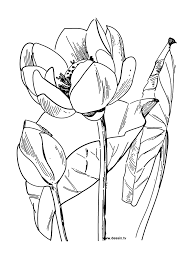 Mandala Fleur De Lotus A Imprimer Fleur De Lotus